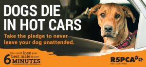 Don't leave your dog in your car!